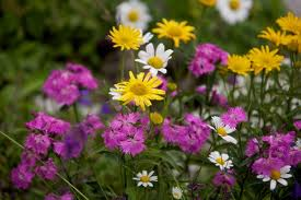 Picture of various species of flowers, all different colours